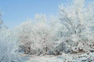 winter-landscape-1352711368jjO