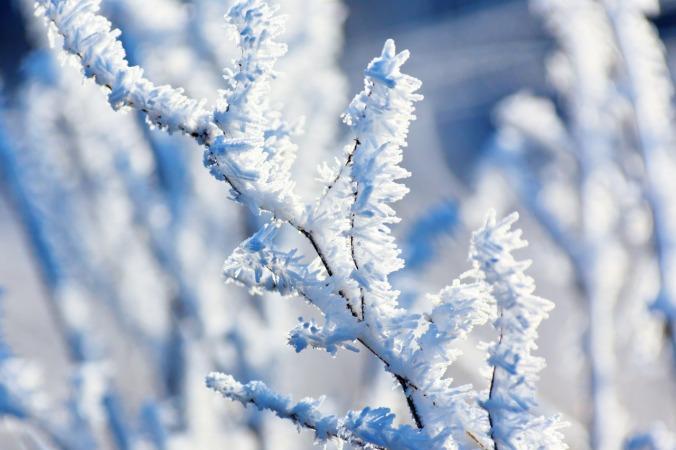 hoar-frost-on-a-branch