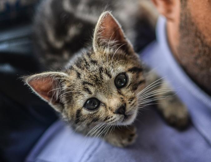 little-kitten-1515265224ojM