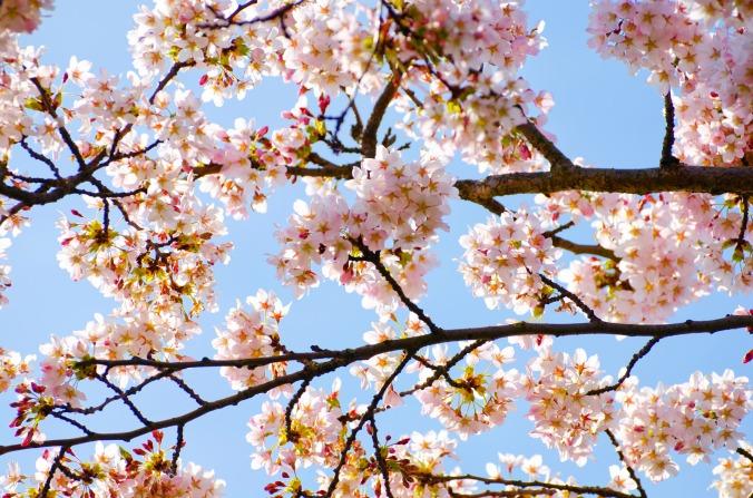 spring-1366454807AK6