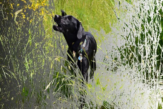 barking-in-grassy-grass