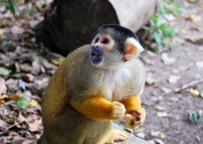 monkey-1360507484HSe