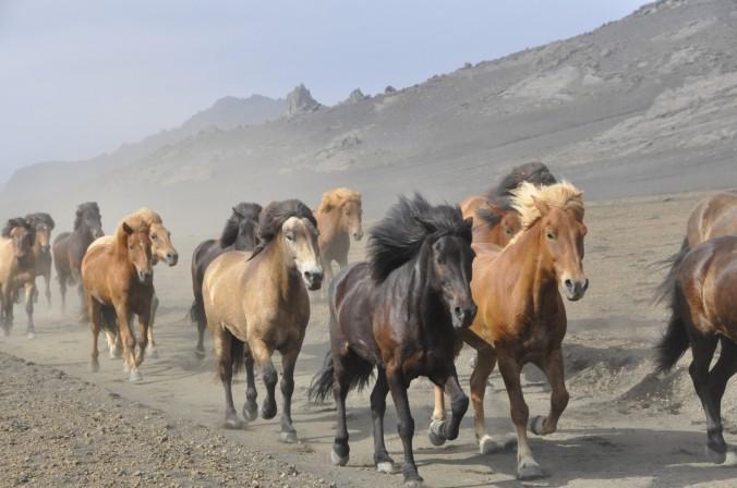 tabun-koni