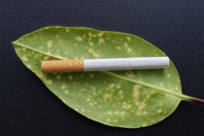 cigarette-leaf