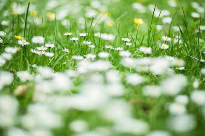 nature grass park plant