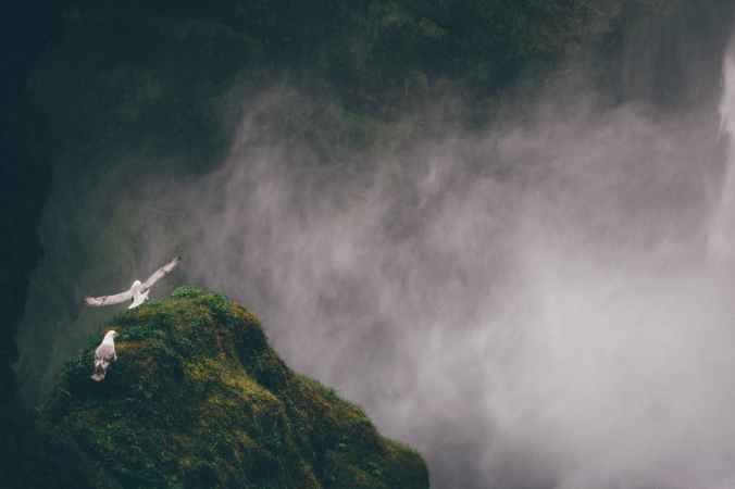 birds cloud fog gloom