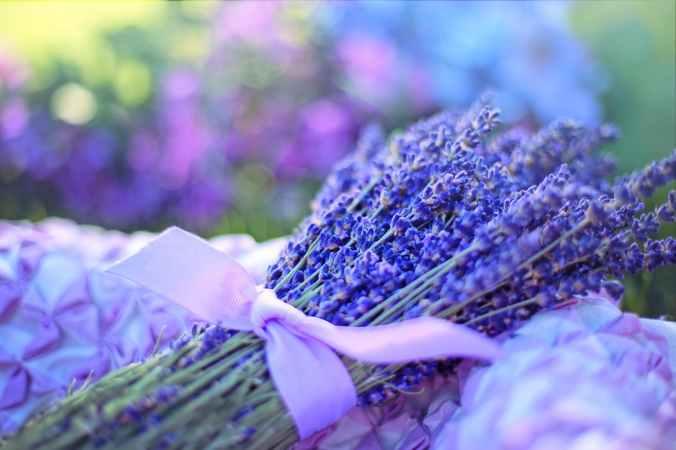 aroma aromatic bloom blossom