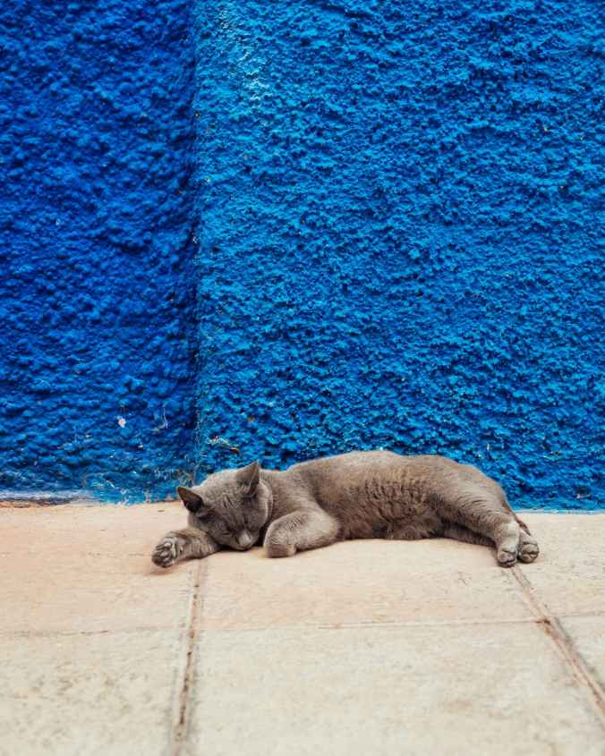 photo of cat lying down on floor near blue wall