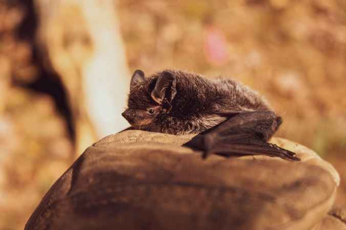 selective focus photo of black bat on brown stone