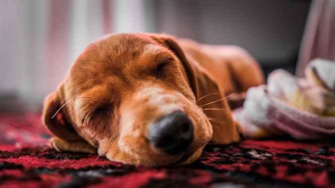 close up photo of dog sleeping