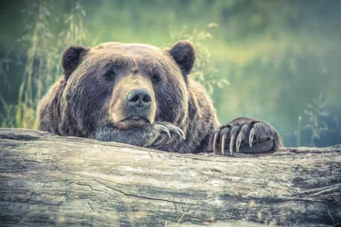 animal animal photography bear big